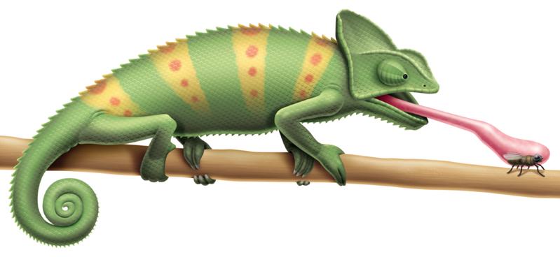 Chameleon drawing - photo#27